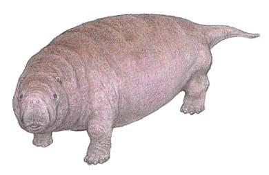 Ancestral Manatee Fossil Found...