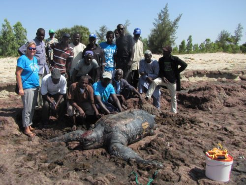 Stranding network members pose with a dead Leatherback sea turtle they documented during a training workshop in Joal, Senegal.