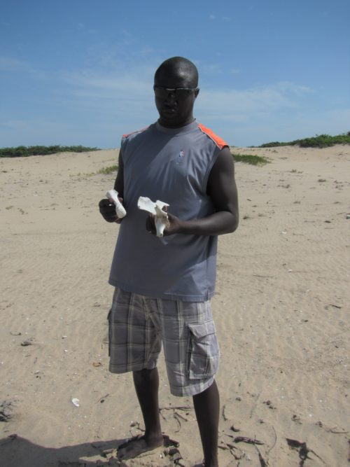 During a beach survey in the Casamance region of southern Senegal, stranding network member Tomas Diagne finds Green sea turtle bones.